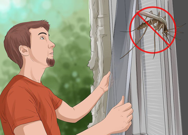 "5 neat tricks to prevent mosquitoes from ""loitering"" to your home"